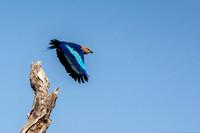 Flying Roller 9 @ Jo Bird