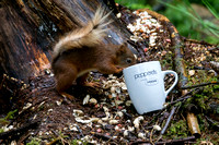 026 Red Squirrel Pepperells Mug © Bob Riach