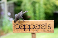 Bird Pepperells Sign 3 © Bob Riach