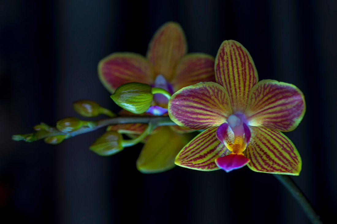 Orchid taken by Bob Riach