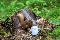029 Red Squirrel Pepperells Mug © Bob Riach