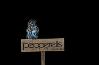 a2 Pepperells Sign Tawny Owl in the Rain © Bob Riach