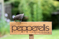 Bird Pepperells Sign 2 © Bob Riach